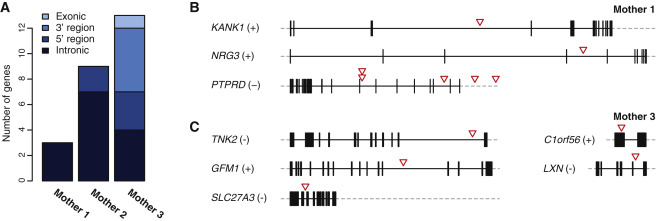 Chromothripsis in Healthy Individuals Affects Multiple