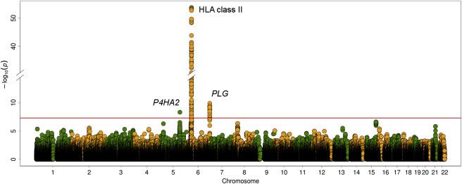 A Genome-wide Association Study Identifies Risk Alleles in