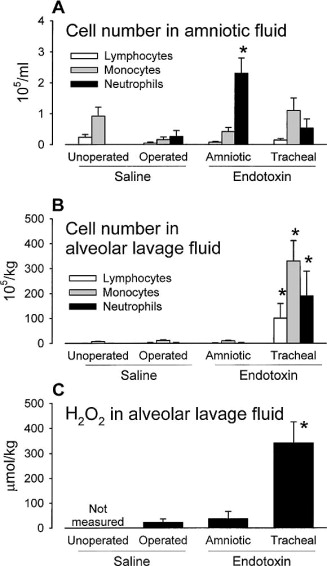 Intra-amniotic endotoxin induces lung maturation by direct