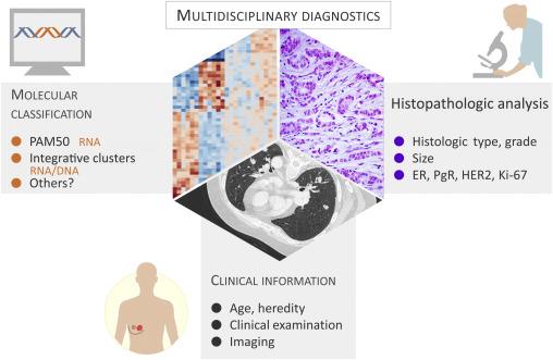 Molecular structure of breast tumor
