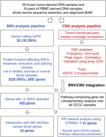 Exome Sequencing Landscape Analysis in Ovarian Clear Cell