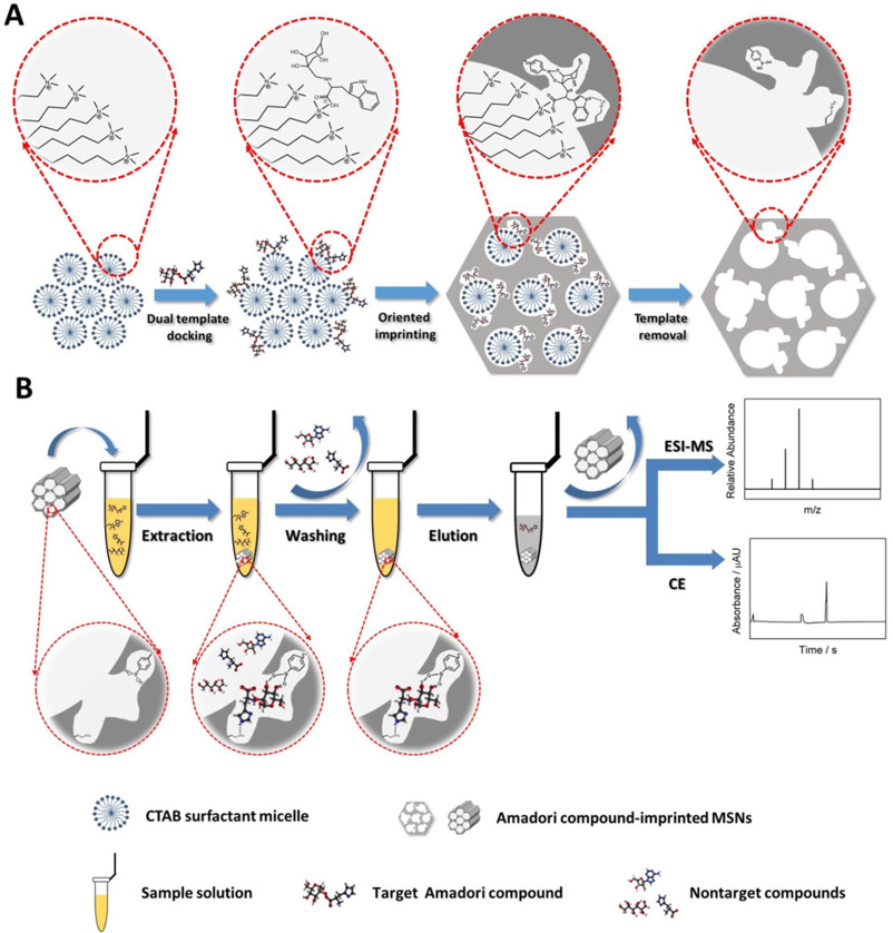 Molecularly imprinted mesoporous silica nanoparticles for