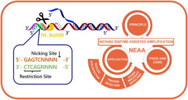 Nicking enzyme-assisted amplification (NEAA) technology and