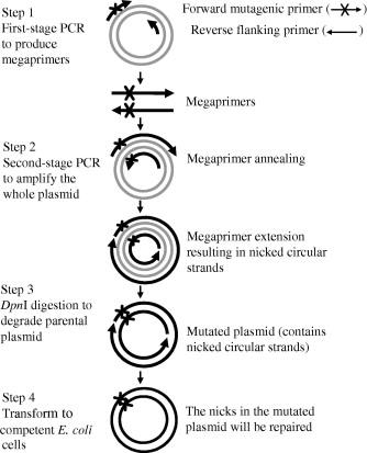 A novel megaprimed and ligase-free, PCR-based, site-directed