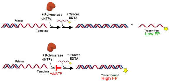 Polymerase Assays For Lead Discovery An Overall Review Of