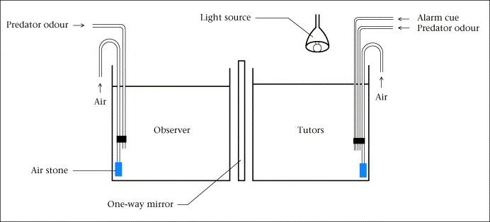 Full Size Image Figure 1