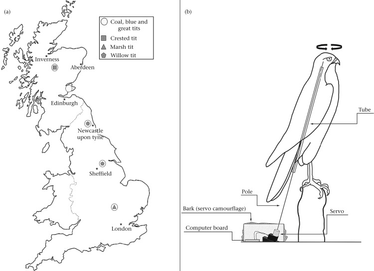 A Comparative Study Of How British Tits Encode Predator Threat In