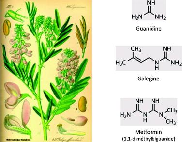 metformin monotherapy
