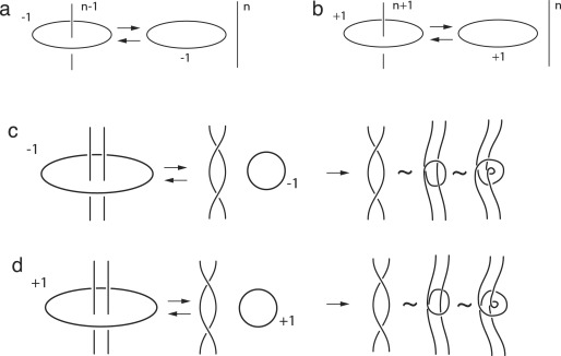 optical knots and contact geometry ii from ranada dyons to