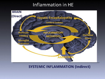Rifaximin hepatic encephalopathy fdating