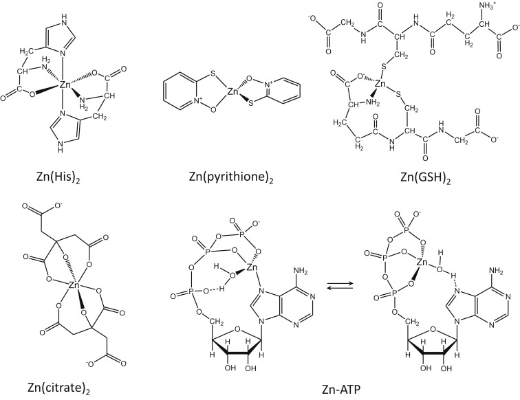 The biological inorganic chemistry of zinc ions sciencedirect ccuart Image collections