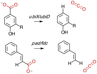 The UbiX-UbiD system: The biosynthesis and use of prenylated