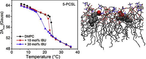 Association Of Ibuprofen At The Polar Apolar Interface Of Lipid Membranes Sciencedirect
