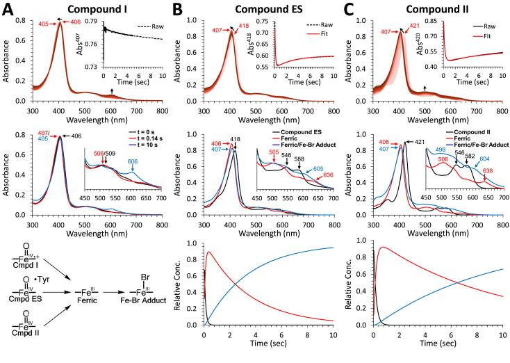 The multifunctional globin dehaloperoxidase strikes again