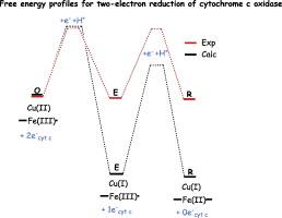 How Cytochrome C Oxidase Can Pump Four Protons Per Oxygen Molecule. Download Fullsize. Proton. Oxygen Molecule Electrons Protons Diagram At Scoala.co