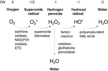Membrane transport of hydrogen peroxide - ScienceDirect