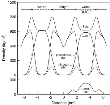 Molecular study of the diffusional process of DMSO in double lipid