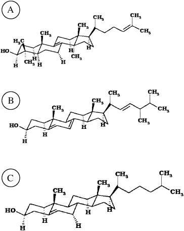 Cholesterol Lanosterol And Ergosterol Attenuate The Membrane
