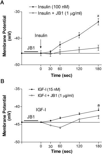 Insulin and IGF-I actions on IGF-I receptor in seminiferous tubules ...