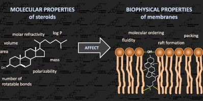 Molecular properties of steroids involved in their effects