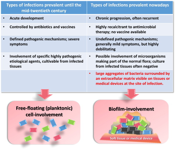 Antimicrobial peptides and their interaction with biofilms of