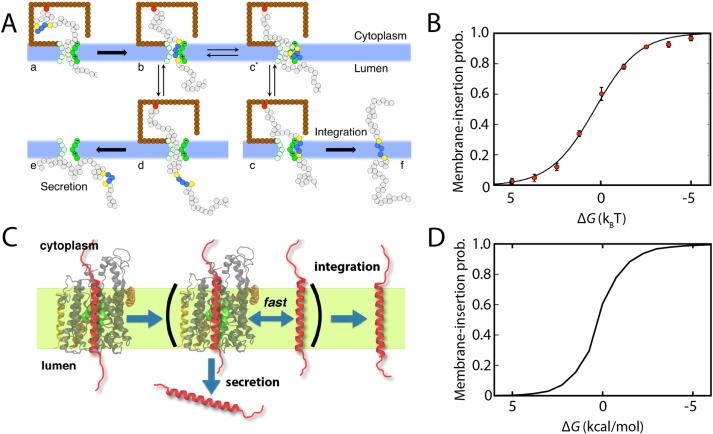 Elucidating membrane protein function through long-time scale molecular dynamics simulation