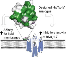 Spider peptide toxin HwTx-IV engineered to bind to lipid membranes
