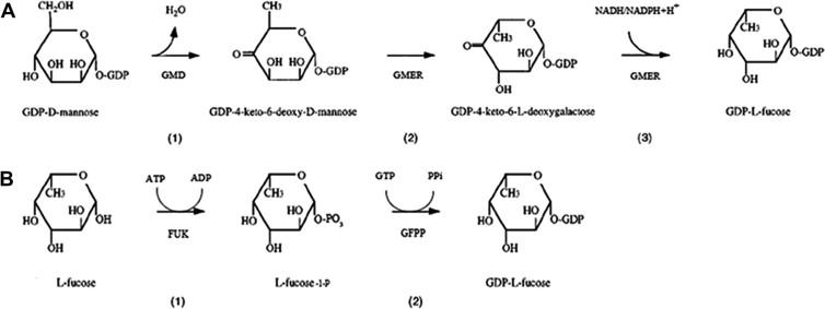 Biochemical characterization o...
