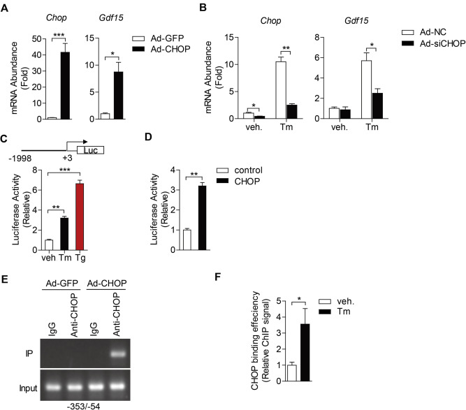 Hepatic GDF15 is regulated by CHOP of the unfolded protein