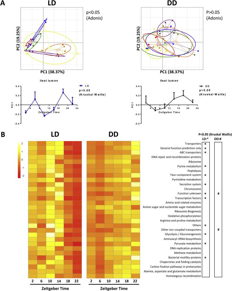 Light exposure influences the diurnal oscillation of gut