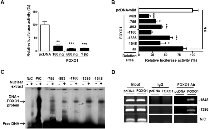 FOXO1 functions in the regulation of nicotinamide
