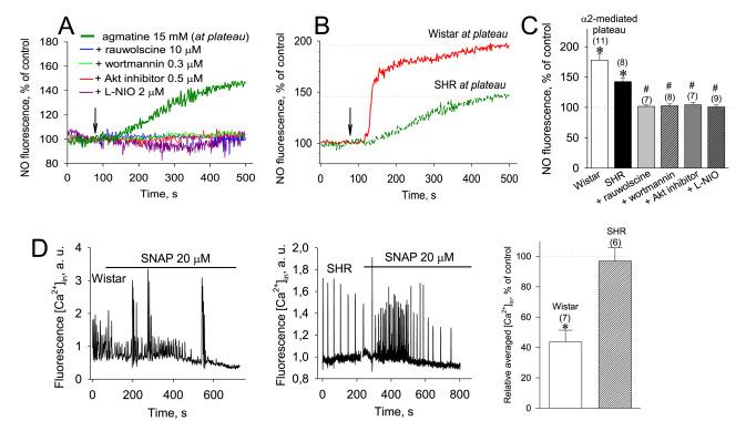 α2-Adrenoceptor signaling in cardiomyocytes of spontaneously
