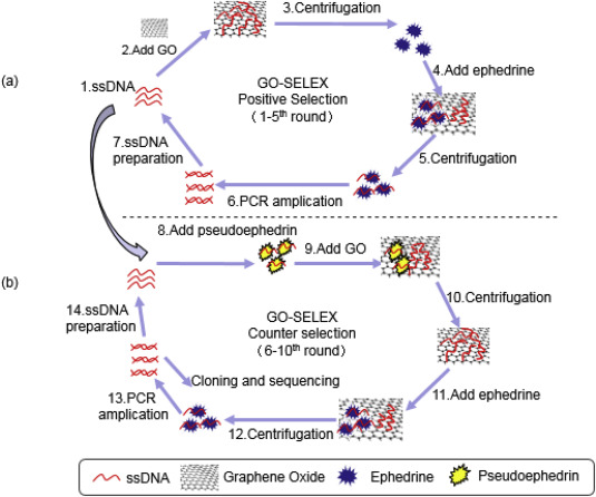 Graphene oxide-assisted non-immobilized SELEX of chiral drug
