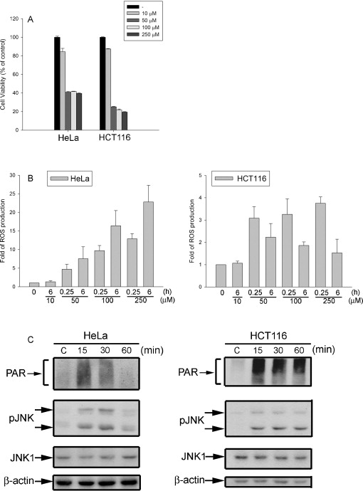 Oxidative stress initiates DNA damager MNNG-induced poly(ADP ...