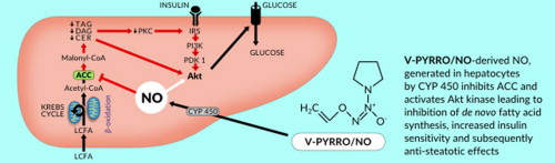 The liver-selective NO donor, V-PYRRO/NO, protects against