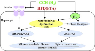 high fat diet mitochondrial superoxide