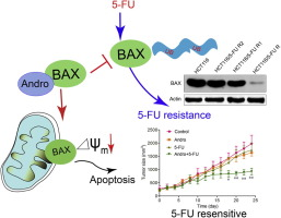 Andrographolide Reversed 5 Fu Resistance In Human Colorectal Cancer By Elevating Bax Expression Sciencedirect