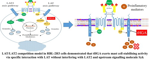 LAT is essential for the mast cell stabilising effect of tHGA in IgE