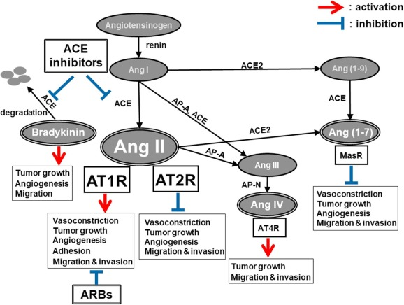 The role of angiotensin II in cancer metastasis: Potential