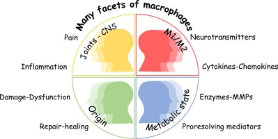 The Many Facets Of Macrophages In Rheumatoid Arthritis Sciencedirect