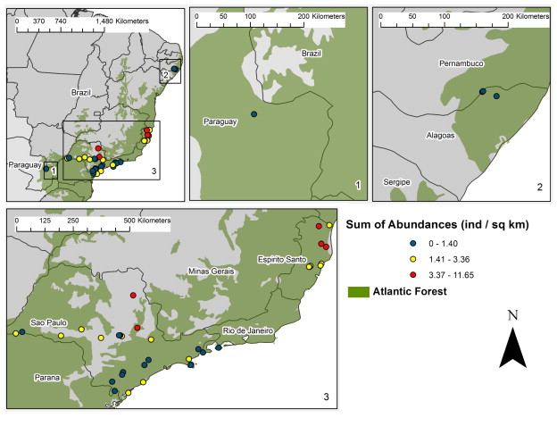 Priority areas for the conservation of Atlantic forest large
