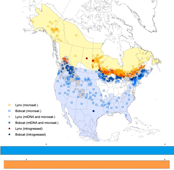 Continental-scale essment of the hybrid zone between ... on canada lynx diet, canada goose range map, canada lynx habitat, canada lynx classification, canada lynx home, canada lynx face, canada lynx life cycle, canada lynx den, lynx habitat map, canada lynx diagram, canada lynx predators, canada lynx behavior, canada lynx sightings in 2014, eurasian lynx range map, lynx territory map, canadian lynx map, canada lynx endangered, canada lynx size, canada lynx cat, canada lynx population numbers,