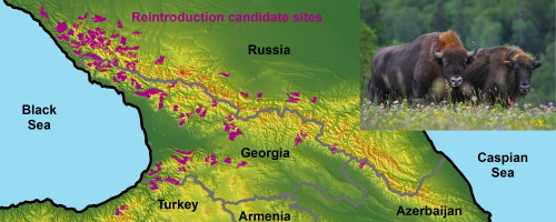 Mapping seasonal European bison habitat in the Caucasus Mountains to on