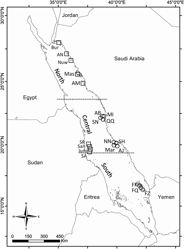Ongoing Decline Of Shark Populations In The Eastern Red Sea