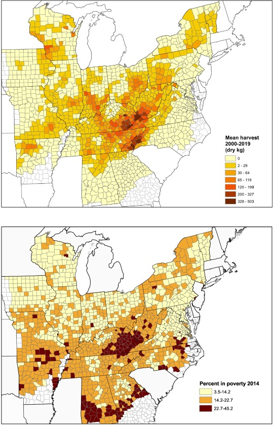 Ginseng In Illinois Map.Explaining Harvests Of Wild Harvested Herbaceous Plants American