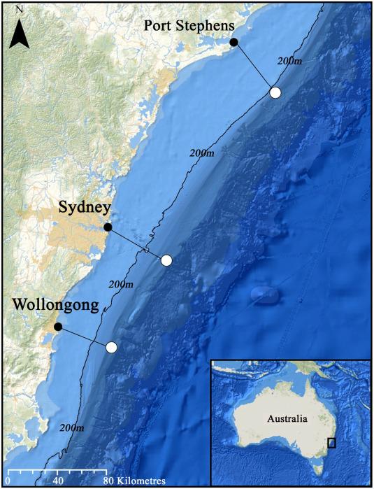 Pelagic citizen science data reveal declines of seabirds off