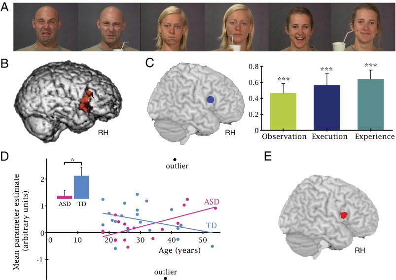 Age Related Increase In Inferior Frontal Gyrus Activity And Social