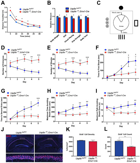 Partial Loss of USP9X Function Leads to a Male