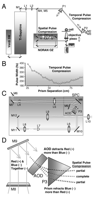 Multi-Photon Laser Scanning Microscopy Using an Acoustic