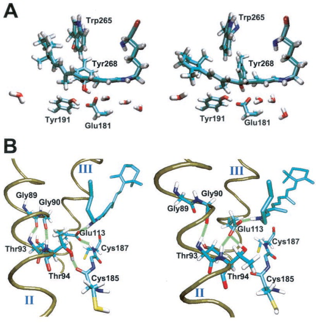Molecular Dynamics Investigation of Primary Photoinduced Eventsin ...